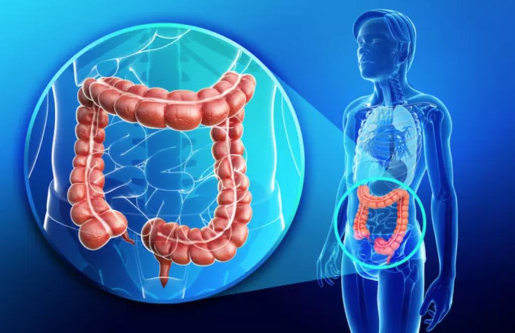 Coloscopie : endoscopie du colon et rectum Nantes Jules Verne